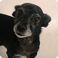 Adopt A Pet :: Doug - Redding, CA