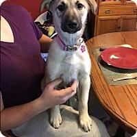 Adopt A Pet :: Hera - Regina, SK