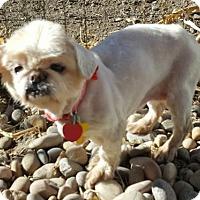 Adopt A Pet :: Zimi - Salt Lake City, UT
