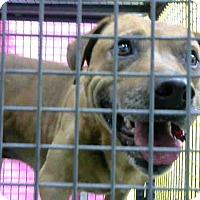 Shepherd (Unknown Type) Mix Dog for adoption in San Bernardino, California - URGENT on 11/23 @DEVORE