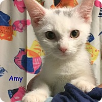 Adopt A Pet :: AMY - Cliffside Park, NJ