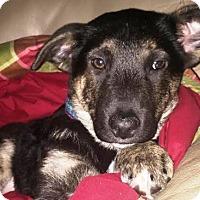 Adopt A Pet :: Lucille - Meg - Kalamazoo, MI