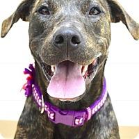 Adopt A Pet :: Lulu - Dublin, CA