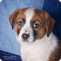 Adopt A Pet :: Emily - Cincinnati, OH