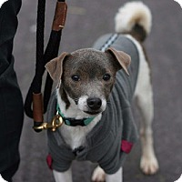 Adopt A Pet :: Rescue Landon - Batavia, NY