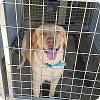 Adopt A Pet :: Jameson - Deer Park, NY