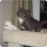 Adopt A Pet :: Frankie - Irvine, CA
