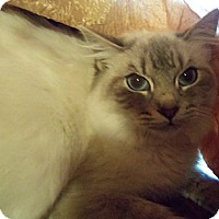 Adopt A Pet :: Serena - Ennis, TX