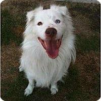 Adopt A Pet :: Skylar - Arlington, TX