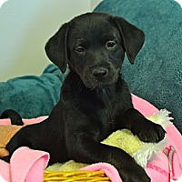 Adopt A Pet :: Anna - Knoxville, TN