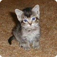 Adopt A Pet :: Tina - Whitestone, NY