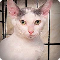Adopt A Pet :: Skipper - Seminole, FL