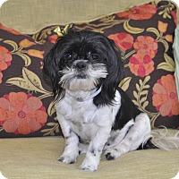 Adopt A Pet :: Lacey - Tumwater, WA