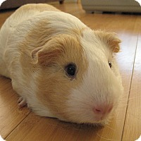 Adopt A Pet :: Lottie - Fullerton, CA
