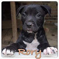 Adopt A Pet :: Rory - Baton Rouge, LA