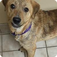 Adopt A Pet :: Olivia - Foster, RI