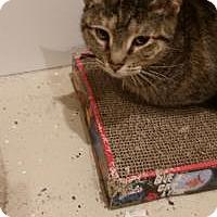 Adopt A Pet :: Rosa - Duluth, GA