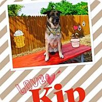Adopt A Pet :: Kip - Riverview, FL