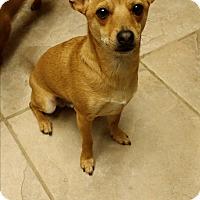 Adopt A Pet :: BOB - Rancho Cucamonga, CA