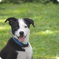 Adopt A Pet :: Meeko - Aurora, IL