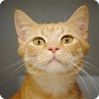 Adopt A Pet :: Suki - Marietta, GA