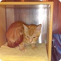 Adopt A Pet :: Nibs - Lancaster, CA