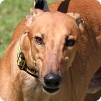 Adopt A Pet :: Diablo - West Palm Beach, FL