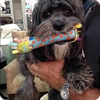 Adopt A Pet :: Oxana - Thousand Oaks, CA