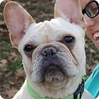 Adopt A Pet :: Dezi - Joplin, MO