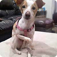 Adopt A Pet :: Champy - Prospect, CT