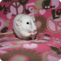 Adopt A Pet :: Freddie - Columbia, SC