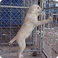 Adopt A Pet :: Pyrenees Pup - Jamestown, TN