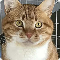 Adopt A Pet :: Dorito - Newtown Square, PA