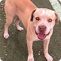 Adopt A Pet :: Carlos - Scottsdale, AZ