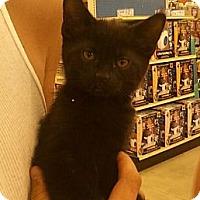 Adopt A Pet :: Mo - Troy, OH