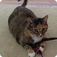 Adopt A Pet :: Tinker - West Dundee, IL