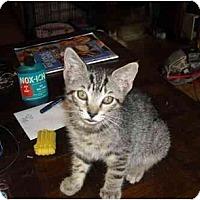 Adopt A Pet :: Lukas - Irvine, CA