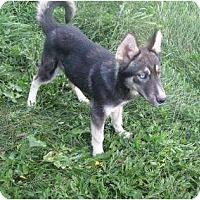 Adopt A Pet :: Dale - Antioch, IL