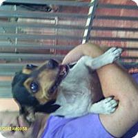 Adopt A Pet :: Izzy - Niceville, FL