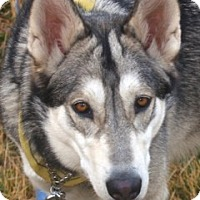 Adopt A Pet :: Aspen - Kettle Falls, WA