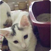 Adopt A Pet :: Lindsy - Brea, CA