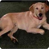 Adopt A Pet :: Charlie Y - Cumming, GA