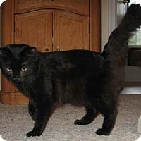 Adopt A Pet :: Feisty - Merrifield, VA