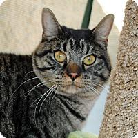 Adopt A Pet :: Jeffery - Palmdale, CA