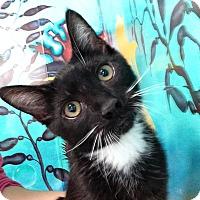 Adopt A Pet :: Sebastian - Newport Beach, CA