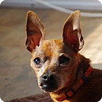 Adopt A Pet :: Henry - Virginia Beach, VA