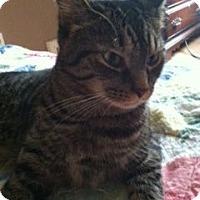Adopt A Pet :: Casey - Cleveland, OH