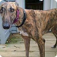 Adopt A Pet :: Braska Lass - Knoxville, TN