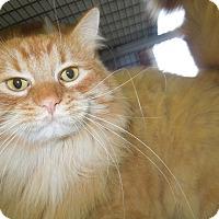 Adopt A Pet :: Thomas - Medina, OH