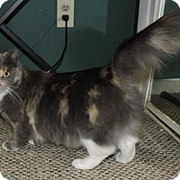 Calico Cat for adoption in Atlanta, Georgia - Lilith